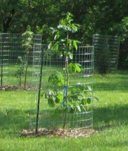 Black River Planting - Original